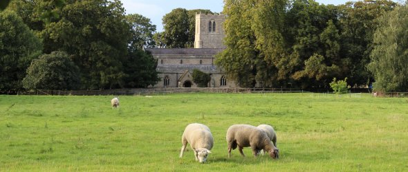 Parish church with sheep in foreground